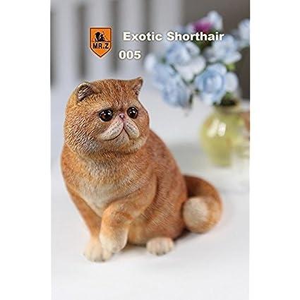 Amazon com: 1/6 Real Animal Series No 8 Exotic Shorthair Cat