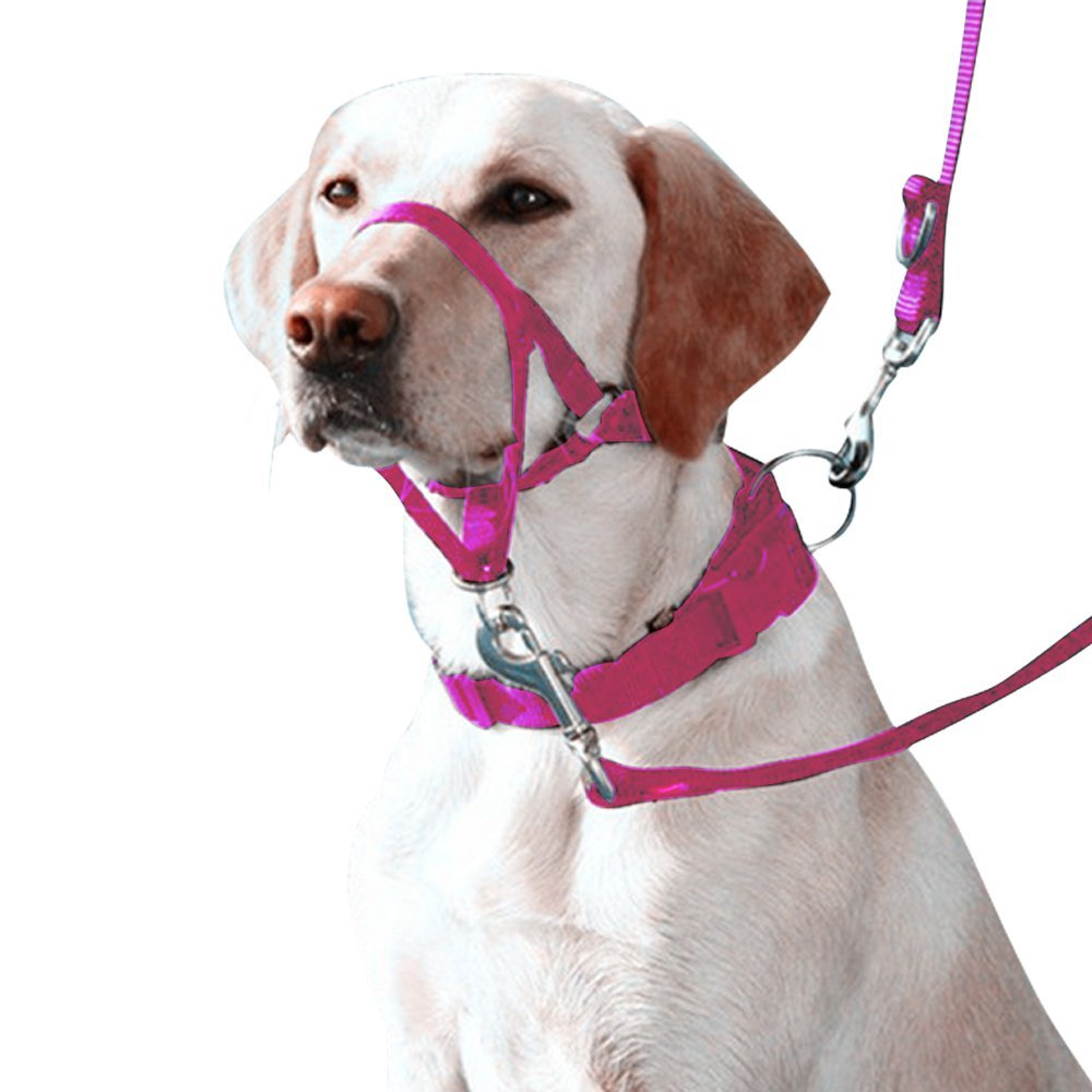 Eastop Dog Head Halter Combination 4 Parts Dog Head Collar Dog HeadCollar Combination 4 Parts