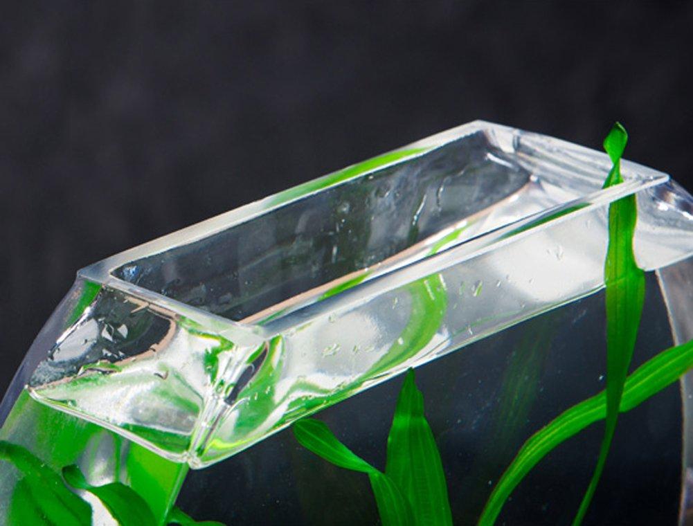 Jiangu - pecera creativa, pecera de cristal, pecera oblada, acuario de salón, decoración de escritorio pecera: Amazon.es: Productos para mascotas