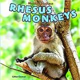 Rhesus Monkeys, Gillian Gosman, 1448850231