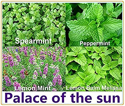 1000ORGANICALLY GROWN Mint Mix 4Varieties Heirloom NON-GMO Spearmint Peppermint