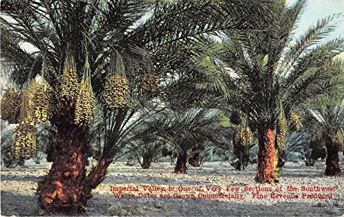 Imperial Valley California Date Trees Farming Antique Postcard J12138