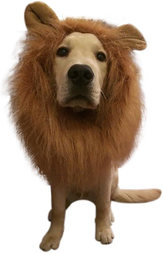 Halloween debe peluca del león Fancy Hair Dogs Lion Mane peluca con orejas para perros de KAYI: Amazon.es: Productos para mascotas
