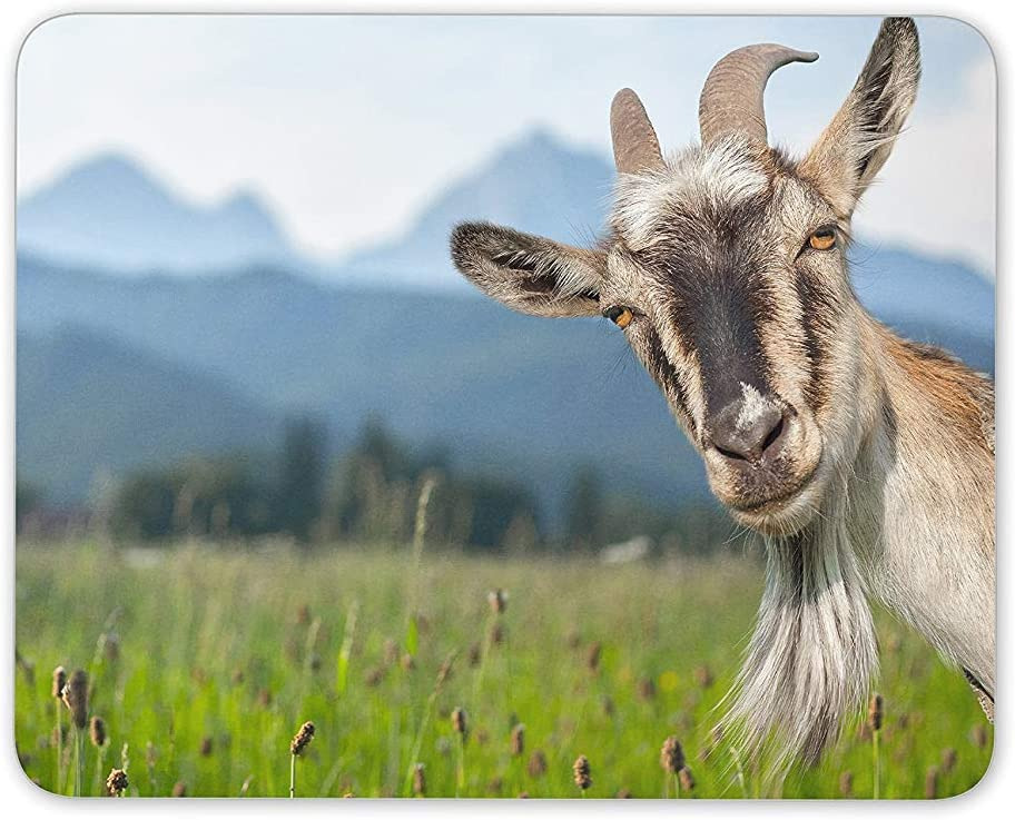 Amazon Com Bglkcs Funny Goat Mouse Pad Goats Animal Sheep Cute Fun Gift Pc Computer Office Products
