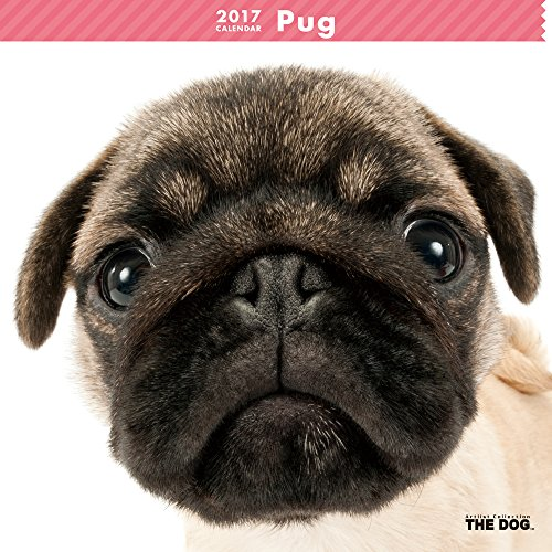 THE-DOG-Wall-Calendar-2017-Pug
