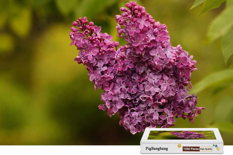 人気新品 PigBangbang、ステンドアート キッズ 大人 キッズ バスウッド - - 紫の花 ライラックの膨張 X - 1500ピース ジグソーパズル (34.4 X 22.6インチ) B07HF6J4NT, grove:0dd912b1 --- a0267596.xsph.ru