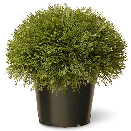 Most bought Artificial Shrubs