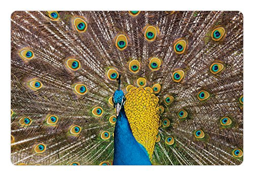 Lunarable Peacock Pet Mat for Food and Water, Peacock Displaying Feathers Vibrant Colors Eye Shaped Patterns Picture, Non-Slip Rubber Mat for Dogs and Cats, 18