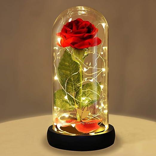 Rosa de la Bella y la Bestia, rosa romántica para mujeres, la ...