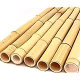 bambus-discount.com Bambusrohr gelb, Moso Bambus, gebleicht, Durch. 2,8-3,5cm, Länge 200cm
