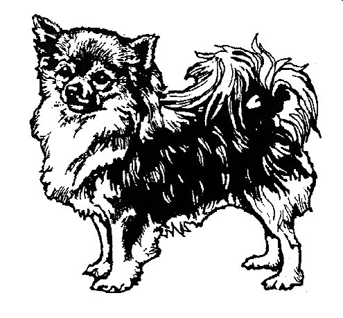 Dog Rubber Stamp - Chihuahua-1E (Size: 2