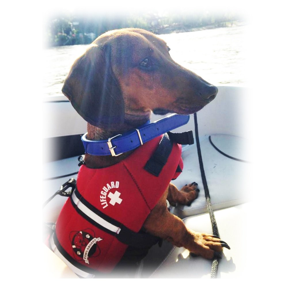 Paws Aboard Red Neoprene Life Jacket Dog or Cat Life Preserver Small 15-20 lb