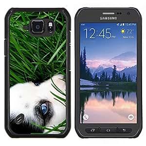 Caucho caso de Shell duro de la cubierta de accesorios de protecci¨®n BY RAYDREAMMM - Samsung Galaxy S6Active Active G890A - Husky siberiano de ojos hierba del verano