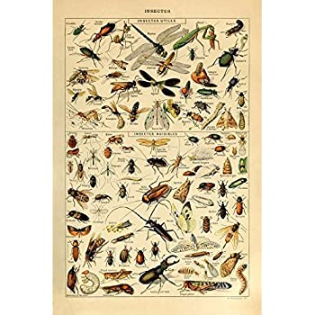 Vintage Poster Print Art Insects Identification Reference Species Collection Entomology Diagram Chart Wall Decor 2087 X 315