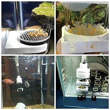 SENZEAL Huevo de Pescado Acuario de incubadora cíclido Tropical criadero de Peces Marinos Criador de Peces de camarones para Peces Tanque 40 mm: Amazon.es: ...