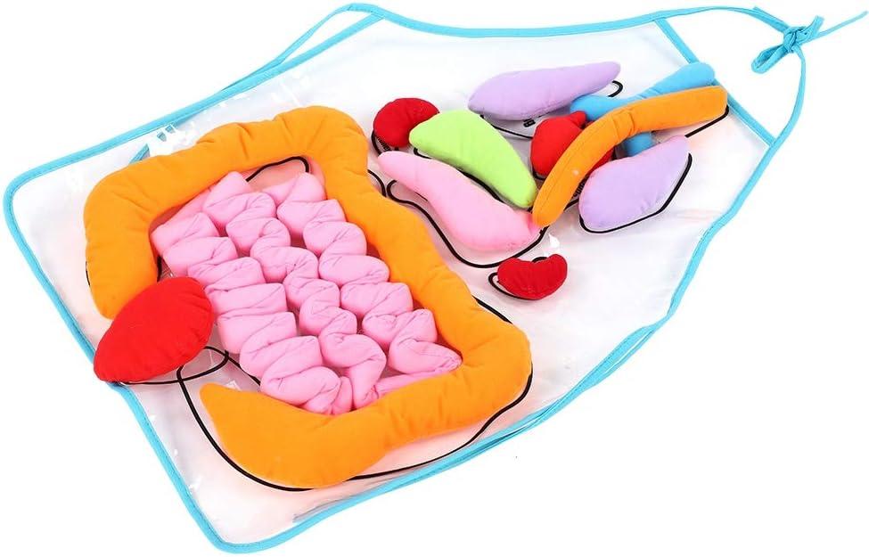 Bicaquu Grembiule per Organo Organo per Il Corpo Umano Giocattolo per la consapevolezza Giocattolo per Lo Sviluppo educativo 3D per Bambini Grembiule educativo in PVC per apprendimento prescolare