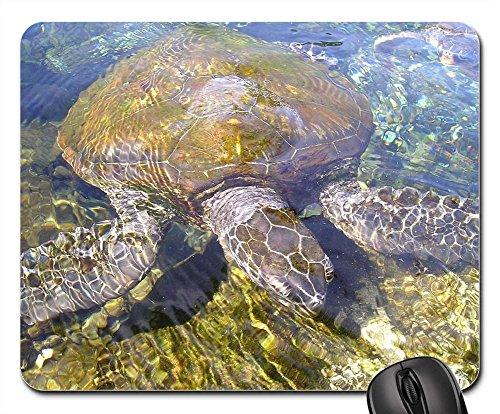 (Mouse Pads - Turtle Animal Water Creature Meeresbewohner)