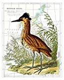 8x10 Inch Fine Art Bird Print of a Great Bittern (Ardea Stallaris) in a Swamp, Overlaid on a Map of the British Isles. Size: 8x10 Inches (BArdStellMap810)