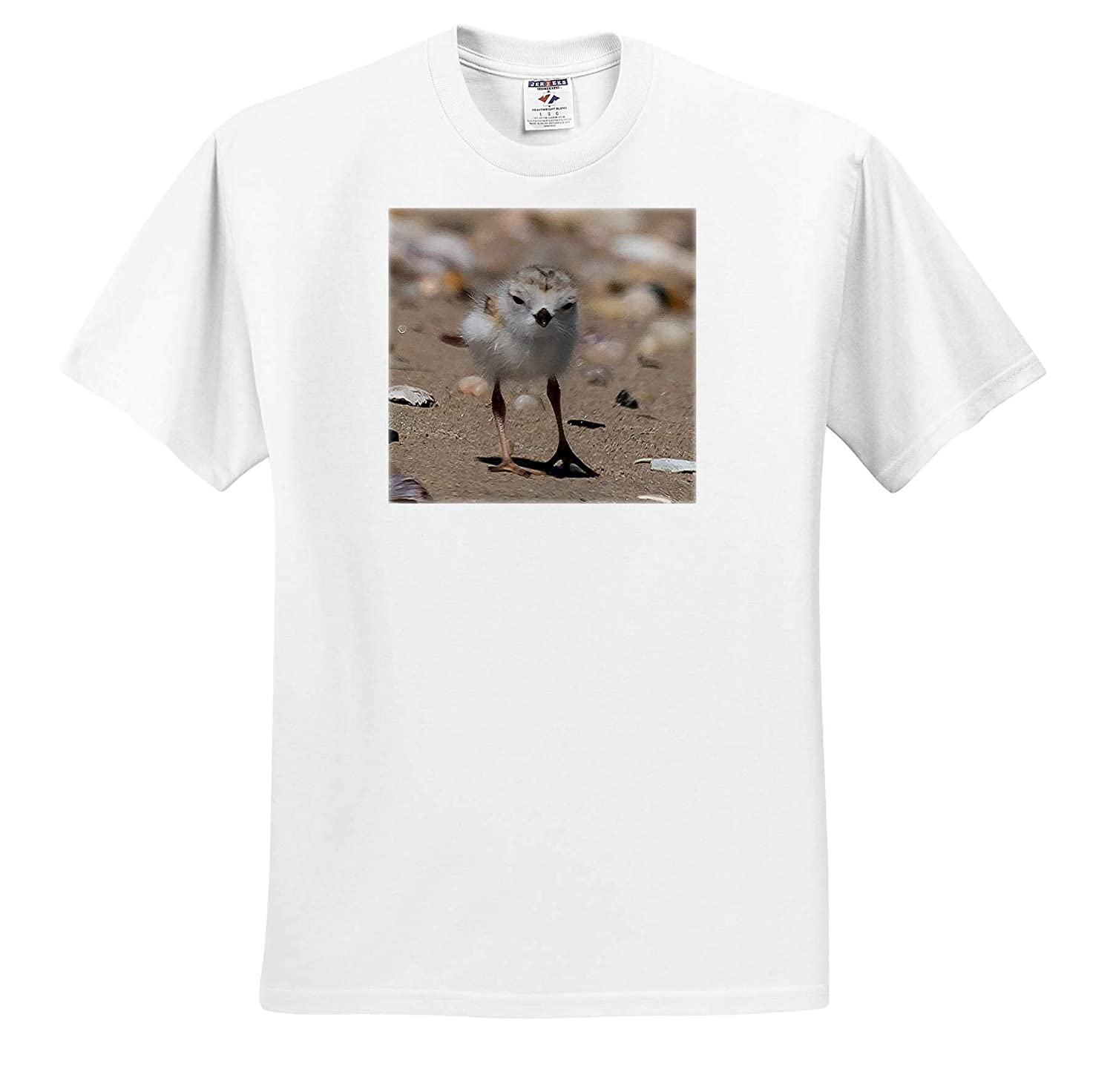 3dRose Roni Chastain Photography T-Shirts Piping Plover Chick