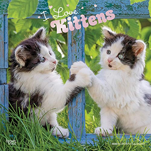 I Love Kittens 2020 12 x 12 Inch Monthly Square Wall Calendar with Foil Stamped Cover, Animals Cats Kittens Feline