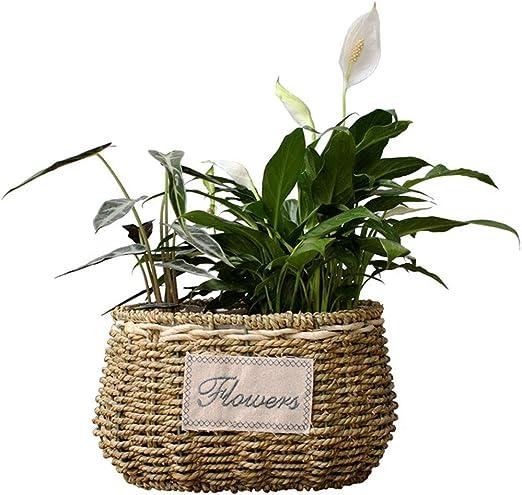 XHZJ Cesta de flores hecha a mano Suculentas de paja, Plantas ...