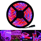 RoLightic 5M SMD 5050 300 LEDs Flexible Strip Plant Growing Light Red Blue 5:1 DC 12V Waterproof IP65 60LEDs/M for Indoor Aquarium Greenhouse Hydroponic Plants Flower Growing (5M Led Strip Only)