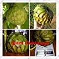 20 pcs Custard apple fruit, Buddha's head fruit, Rare Giant Cherimoya seeds,Sugar Apple, SweetSop, Annona Tree Seeds