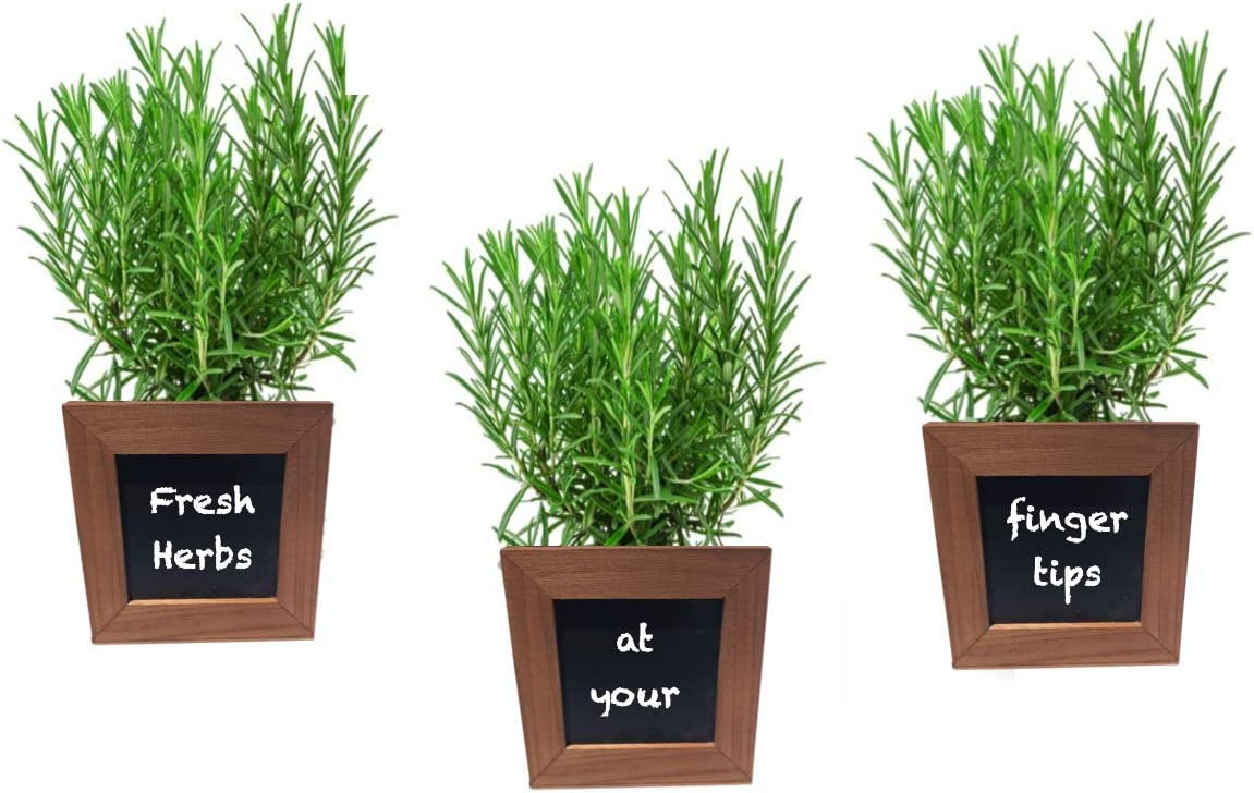 Wooden Herb Pots with chalkboards for Herbs, Succulents, or Small Plants. Waterproof Liner Included. Set of 3