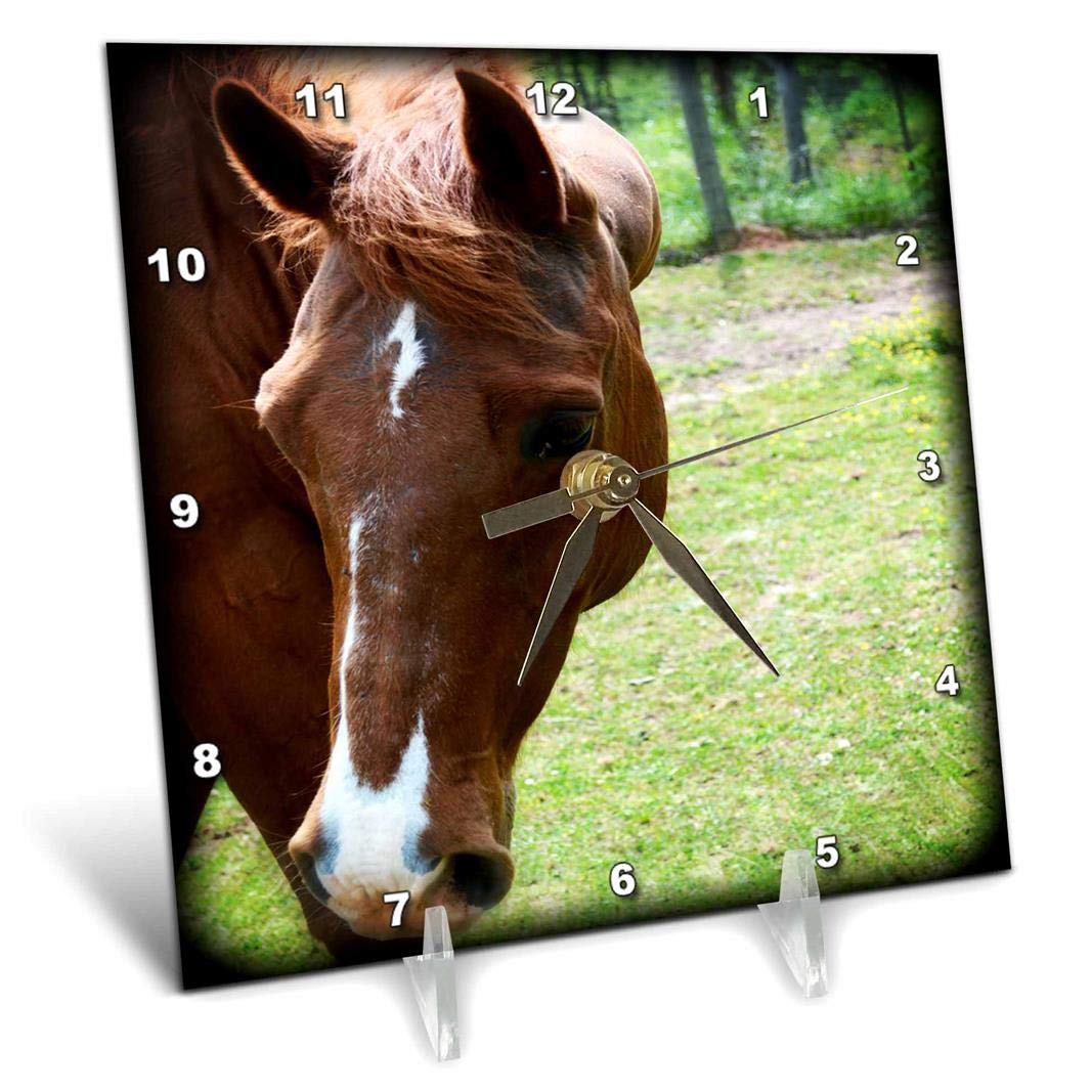 3dRose dc_218801_1 Dark Brown Horse Head is A Front Photo of A Beautiful Horse Desk Clock, 6 by 6\'