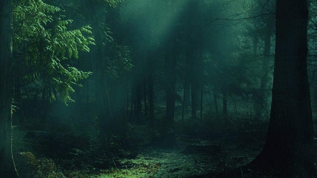 Kpoiuy Paquete De Pintura por NúMero En Lienzo Pintura Al óLeo Bosque Niebla áRboles Sombras Luz Cuadros Pintados A Mano del Arte del Colorante De AcríLico para La Sala De Estar