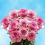 50 rosas rosadas que son el perfecto regalo para sorprender y agradar a alguien. Estas rosas muestran todos los sentimientos que no puedes expresar con palabras. Puedes estar seguro de tener los mejores momentos y memorias con nuestras flores...