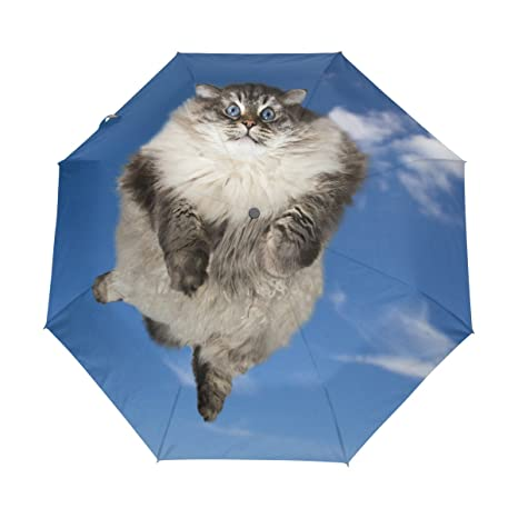 6a424135f302 Amazon.com : Naanle Funny Cat Flying Clouds Blue Sky Auto Open Close ...