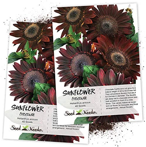 For Summer Plantings 30 Chocolate Cherry Sunflower Seeds