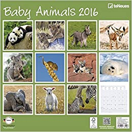 Baby Animals 2016 - Grid Calendar Animal Photography Calendar - 30 X 30 Cm por Teneues epub