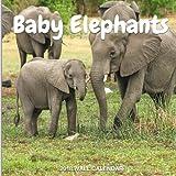 Baby Elephants 2018 Wall Calendar