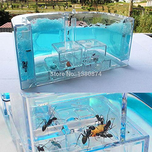 Hot New Arrival Natural Ant Home Farm Ecological Toys Science Educational For Kids Blue pet supplies