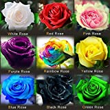 (Rose1-9 *Ambizu*) This Order Include 9 Packs Each Color 50 Seeds Chinese Rose Seeds - Rainbow Pink Black White Red Purple Green Blue Rose Seeds by AMBIZU 99-99