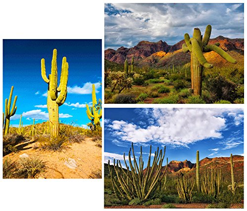 CACTUS: Saguaro and Organ Pipe- Sonoran Desert - 3 Lenticular 3D Postcard Greeting Cards