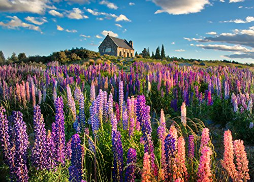 Adult Jigsaw Puzzle Landscape Wildflower The Lupins In Spring 500-Pieces