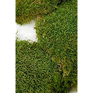Moss Sheet Preserved 1.1 lbs - Excellent Home Decor - Indoor & Outdoor 2