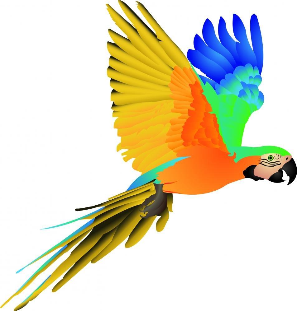 Amazon.com: Wallmonkeys Blue Macaw Parrot Flight Wall Decal Peel and ...