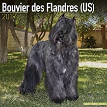Bouvier des Flandres (US) Calendar 2019