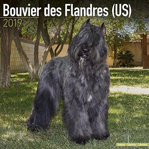 Bouvier des Flandres (US) Calendar - Dog Breed Calendars - 2018 - 2019 Wall Calendars - 16 Month by Avonside