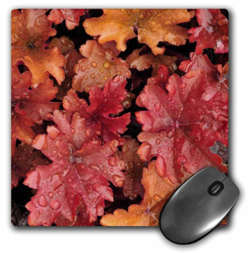3dRose LLC 8 x 8 x 0.25 Inches Mouse Pad, Oregon, Portland, Peach Flambe Heuchera Flora, Jaynes Gallery (Heuchera Peach)