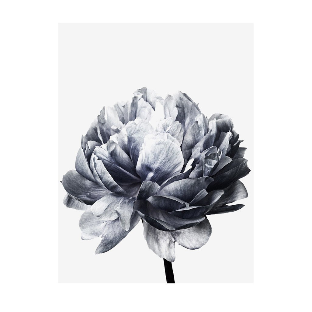 wintefei Nordic Minimalist Peony Painting Floral Flower Picture Wall Art Home Decor Gift - 2# 20cm x 30cm