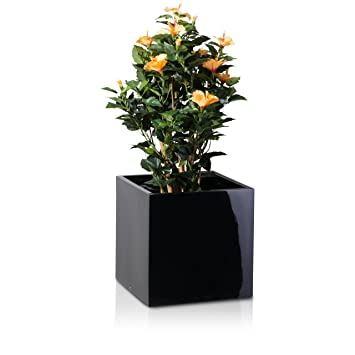 Frost Garden Pots Plant pot cubo fibreglass planter flowerpot colour black glossy plant pot cubo fibreglass planter flowerpot colour black glossy high gloss workwithnaturefo