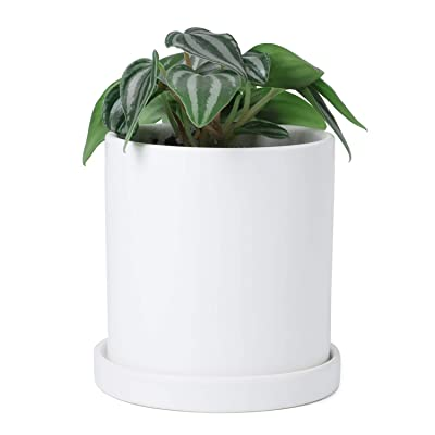 Greenaholics Plant Pots - 4.3 Inch Ceramic Matte Surface Cylinder Ceramic Planters for Succulents, Cactus, Flower Planting, with Drainage Hole and Tray, Matte White: Garden & Outdoor