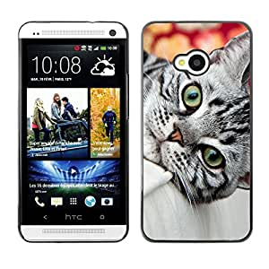 Vortex Accessory Carcasa Protectora Para HTC ONE ( M7 ) - British Grey Shorthair Wirehair Cat House -