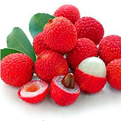 Elever Litchi Seeds Liquique Lychee Seeds Garden Bonsai Planting Rare Fruit Tree Seeds Flowers : Garden & Outdoor