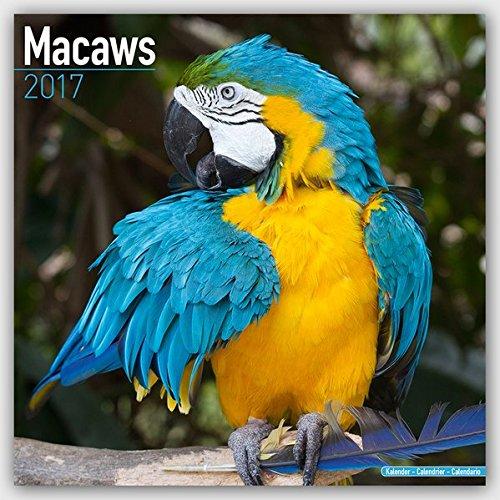 Macaws - Ara Papageien - Aras 2017: Original Avonside-Kalender [Mehrsprachig] [Kalender] (Wall-Kalender)